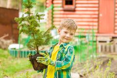 Boy holding a tree seedling in hands royalty free stock image
