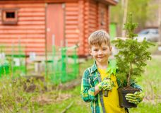Boy holding a tree seedling in hands stock photography