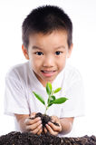 Boy holding young plant in hands above soil Royalty Free Stock Images