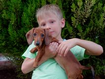 The boy holds a beautiful red dachshund
