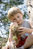 Boy holds bird nest. A young boy holds a bird nest wearing a gray shirt and red shorts Stock Images