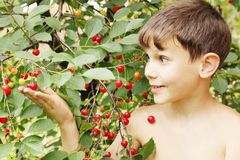 Boy holds cherries Stock Photography