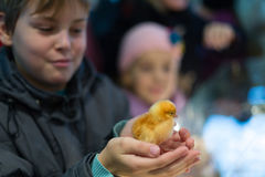 A boy holds a chicken. At Agricultural Exhibition in All-Russian Exhibition Center stock photography