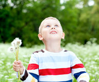 Boy  holds a dandelions in hands Stock Image