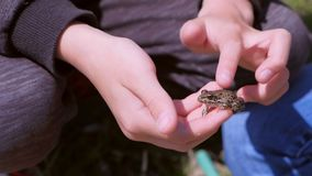 Boy holds in hands catching little frog and touches it back, hands closeup. Boy is walking on the riverbank. He is catching frogs. He is wearing sport suit stock footage