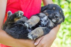 The boy holds on his hands a small puppy. Children and Animals_ stock photos