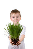 Boy holds a  plant Stock Photography