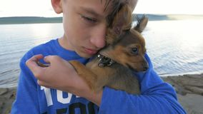 Boy holds two dogs in her hands. The toy terrier fluttering hair in the wind. They are very differently looking around stock video