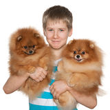 Boy holds two pomeranian spitz Stock Photography