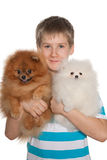Boy holds two pomeranian spitz Royalty Free Stock Images