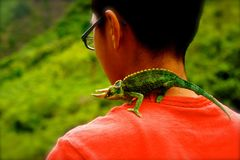 Boy with horned lizard pet. Came across this unnamed hiker on a jungle trail in Maui`s Iao Valley. The lush greens of the Maui Hawaii Iao Valley jungle provides royalty free stock image