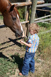 Boy and horse Royalty Free Stock Photo