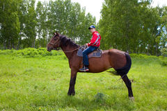 Boy on a horse. Teen riding a horse in the summer Royalty Free Stock Photos