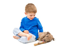 Boy hugging a puppy pit bull, gnawing bone. Sitting isolated on white background Royalty Free Stock Image