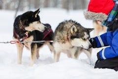Boy with husky dog Stock Photos