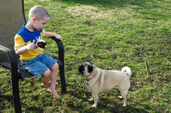 Boy ice cream and pug dog Stock Photos