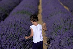 Boy In Lavender Royalty Free Stock Image