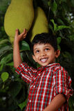 Boy with jack fruit. Boy touches a jack fruit hangs on a tree Royalty Free Stock Image