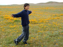 Boy Joy. Boy running through poppy field, arms outstretched stock photo