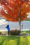 Boy Jumping for Leaves Stock Photo