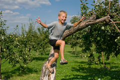 Boy jumping from a tree Stock Photography