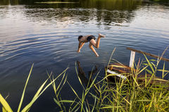 A boy jumps in a lake with a running start Royalty Free Stock Photos