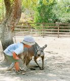 Boy and kangaroo in zoo Royalty Free Stock Image