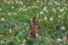 The boy keep lotus flower Royalty Free Stock Images