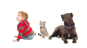 Boy, kitten and dog looking up. Boy, kitten and dog sitting together looking up Royalty Free Stock Photo