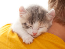 Boy and kitten Royalty Free Stock Photo
