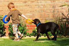 Boy with labrador. Little boy playing with his pet labrador Royalty Free Stock Photos