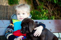 A boy with Labrador puppy Royalty Free Stock Photos
