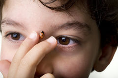 Boy with ladybug Royalty Free Stock Photos