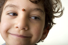 Boy with ladybug Stock Photo
