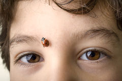 Boy with ladybug Royalty Free Stock Photography