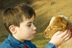Boy with lamb. Little boy holding delicate a lamb royalty free stock photo