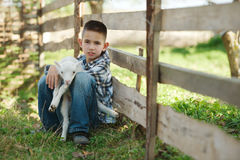 Boy with lamb on the farm Stock Images