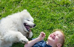 The boy laughs lying with a white dog in the park on the grass in spring. A little boy plays with a white samoyed dog on the grass and laughs royalty free stock photos