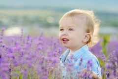 Boy  in lavender summer field Royalty Free Stock Image