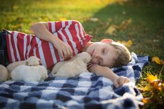 Little boy snuggling with cute tan puppies. A boy laying on a blue and white checkered blanket on the grass playing with cute, little, tan puppies stock photo