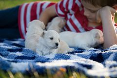 Little boy snuggling with cute tan puppies. A boy laying on a blue and white checkered blanket playing with cute little tan puppies royalty free stock photo