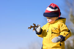 Boy with leaf Royalty Free Stock Photography