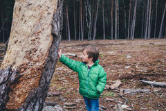 Boy leaning against tree trunk Royalty Free Stock Images