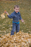 Boy and leaves Royalty Free Stock Photos