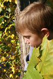 Boy with leaves. Stock Photo