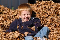 Boy in Leaves stock photo