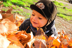 Boy in leaves Royalty Free Stock Photo