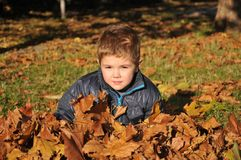Boy in the leaves of autumn. Boy  in the leaves of autumn,happiness Stock Photography