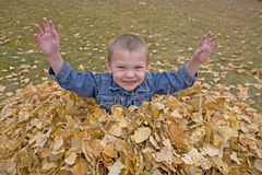 Boy in leaves with hands up. Stock Images