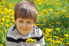The boy lies in the dandelions Royalty Free Stock Photo